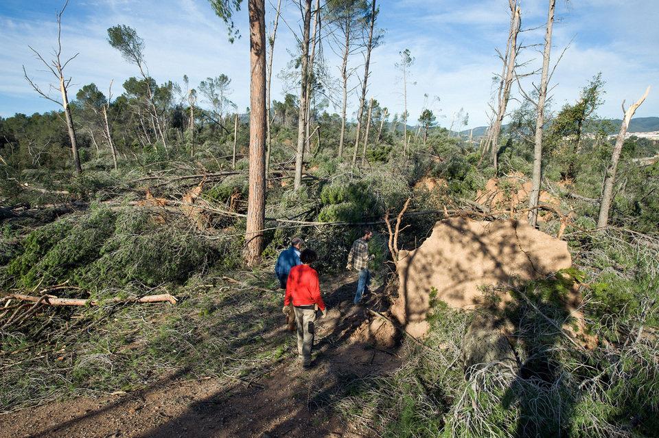 El bosque de Can Deu después del temporal del viento
