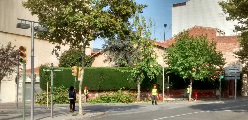Poda d'arbres a l'eix central de Sabadell